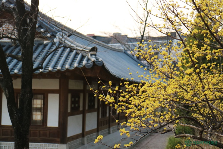 Spring of Ewha